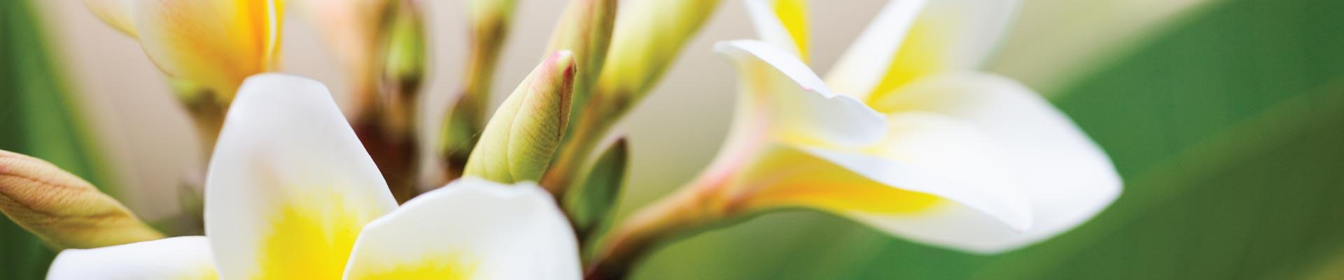 blossom-boutique-floral-banner-1