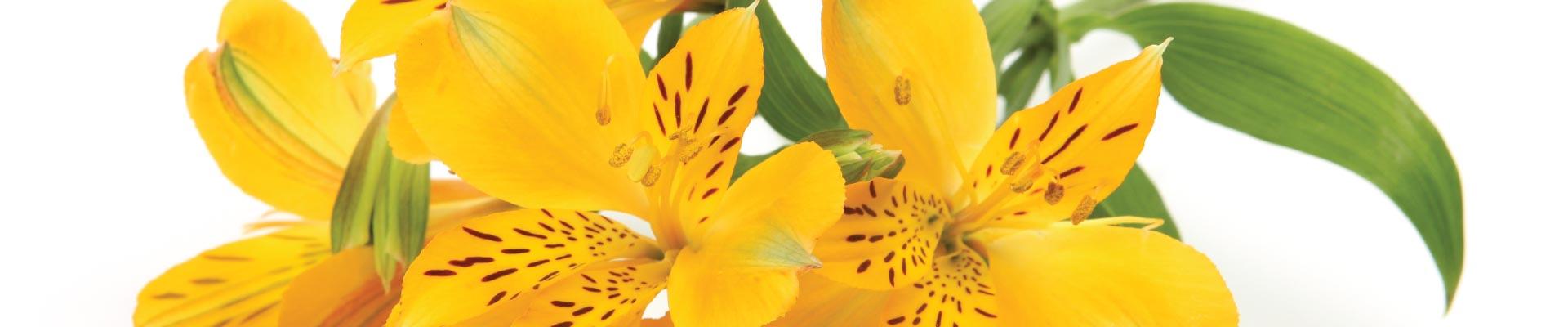blossom-boutique-floral-banner-2